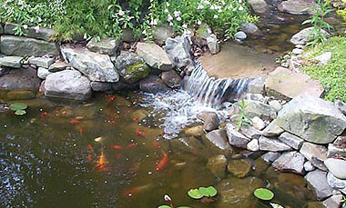 Koi ponds kiefer landscaping for Koi carp pond depth